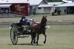 Carolyn Blakeley of Yass NSW driving her striking 'Flemington Dee'-1