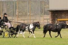 Belinda Drury Open Pony Tandem winner