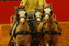 Equitana 2014 Bram Chardon Team
