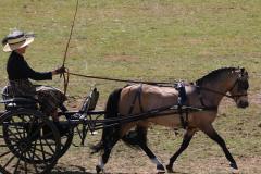 Class-1-Single-pony-any-vehicle-1st