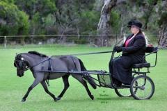 Class-10-Miniature-horse-pony-1st
