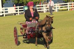 Class-10-Miniature-horse-pony-2nd