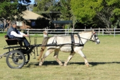 Range Carriage Club - Queensland 7