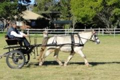 Range Carriage Club - Queensland 7