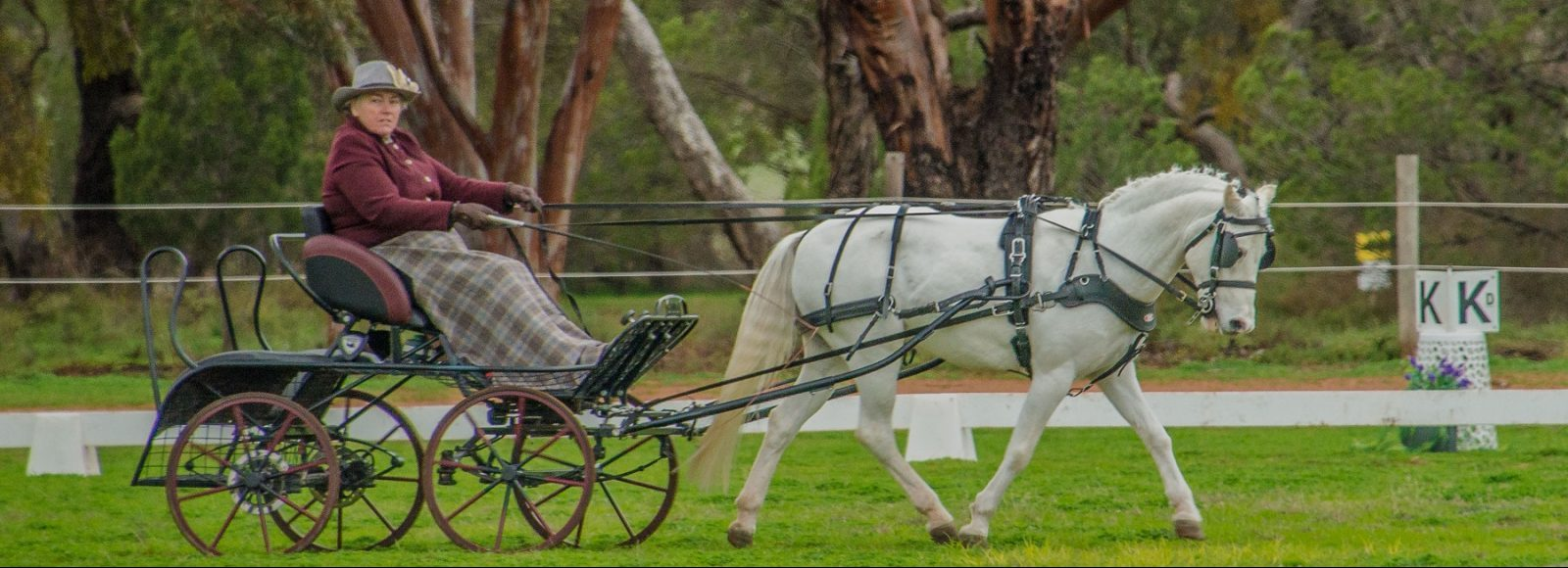 Interstate visitor Glenda Marshall winner Inter Pony 91cm & under 121 cm CDE Championships (1 of 1)